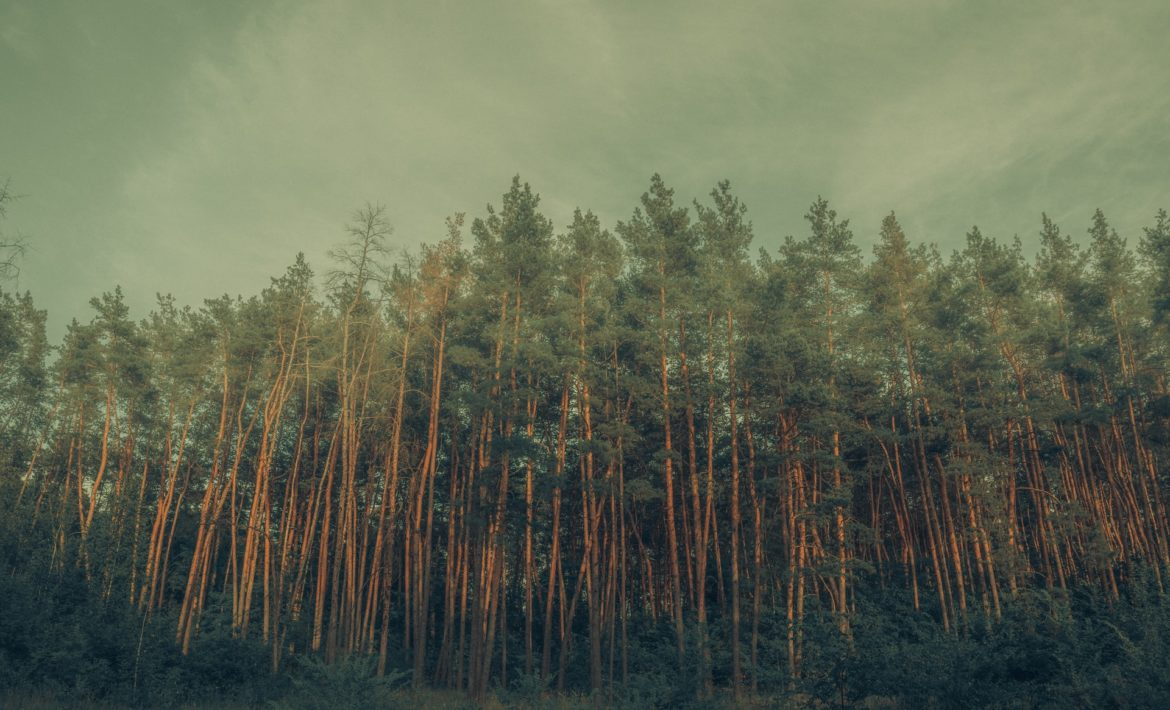 How to Get Bankruptcy Leads Header image of a forest