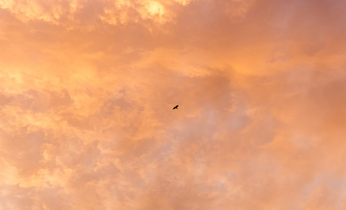 Golden sky with picture of a bird